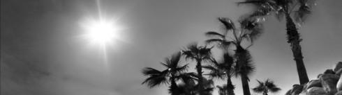 summer_banner